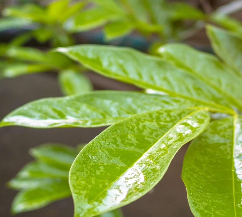 Wet Leaves - cropped